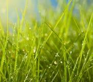 湿的草 库存照片