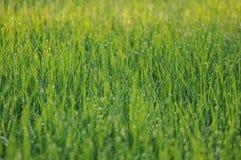 湿的草 免版税库存照片