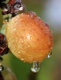 湿的葡萄 图库摄影