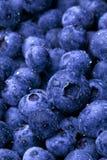 湿的蓝莓 免版税库存图片