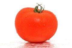 湿的蕃茄 免版税库存照片