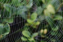 湿的蜘蛛网 免版税库存图片