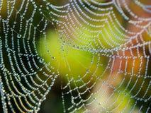 湿的蜘蛛网 免版税图库摄影