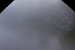 湿的蜘蛛网 库存照片
