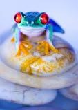 湿的青蛙 免版税库存照片