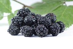 湿的黑莓 免版税图库摄影