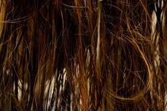 湿的头发 库存照片