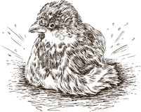 湿的麻雀 图库摄影