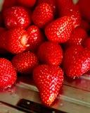 湿的strawberrys 库存照片
