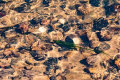 湿石头和海藻在水下在小河 免版税图库摄影