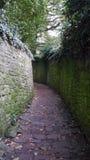 湿石路在德国市海得尔堡庭院里在秋天之前 免版税库存照片