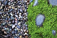 湿石头和草 免版税图库摄影