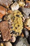 湿石头和蜗牛 免版税图库摄影