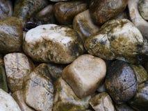 湿石头在装饰的庭院里 免版税图库摄影