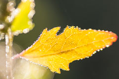 湿秋叶 免版税库存照片