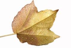 湿秋天叶子 免版税库存照片
