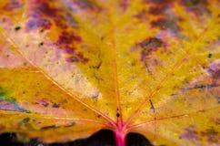 湿秋天的叶子 多彩多姿的板料 湿的叶子 免版税库存照片