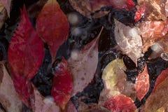 湿秋天-叶子 库存图片
