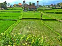 湿米领域和房子在Ubud,巴厘岛 免版税库存图片