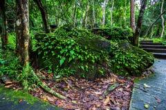 湿绿色叶子蕨和青苔在岩石增长在剧痛热带半灌木瀑布, Srakaew泰国greenscape  库存图片