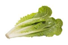 湿绿色留下长叶莴苣沙拉 免版税库存照片