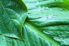 湿绿色的事假 库存图片