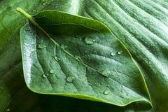 湿绿色的事假 免版税库存图片