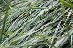 湿绿草的背景 免版税库存照片