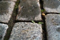 湿老花岗岩路面特写镜头 免版税图库摄影