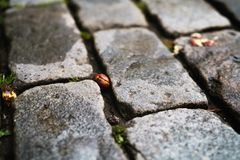 湿老花岗岩路面特写镜头 库存照片