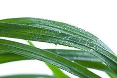 湿背景新鲜的草 库存照片