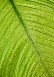 湿背景的叶子 库存照片