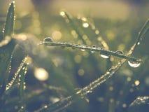 湿草坪在灌溉以后 库存照片