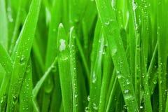 湿草的宏指令 免版税库存照片