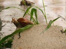 湿蜗牛零件 库存图片
