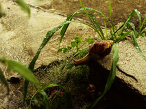 湿蜗牛Part3 库存照片