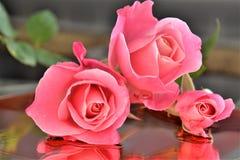 湿表面上的桃红色玫瑰 库存图片
