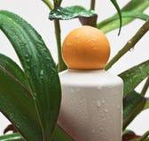 湿装饰性的奶油色的叶子 免版税库存图片