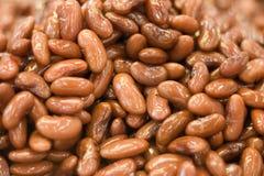 湿豆的肾脏 库存照片