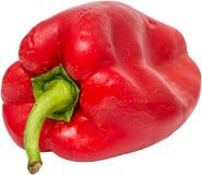 湿辣椒的果实 库存图片