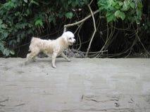 湿连续长卷毛狗 库存照片