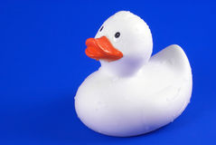 湿逗人喜爱的鸭子的橡胶 库存照片