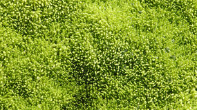 湿青苔的纹理 库存图片