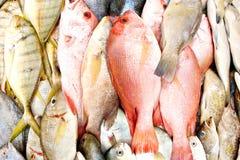 湿鱼的新鲜市场 库存照片