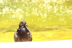 湿鸟在热天气的夏天在水附近 免版税库存图片