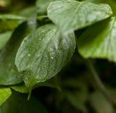 湿绿色事假 图库摄影