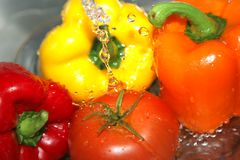 湿2棵的蔬菜 免版税库存图片