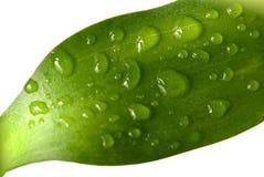 湿5竹子的叶子 免版税库存照片