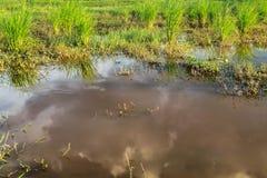 水源 免版税库存图片