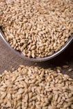 溢出的麦芽 免版税库存照片